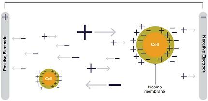 Principe mesure capacitance